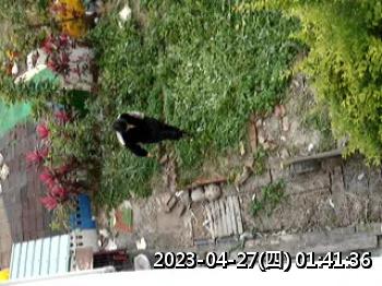 怪老頭在破壞菜園